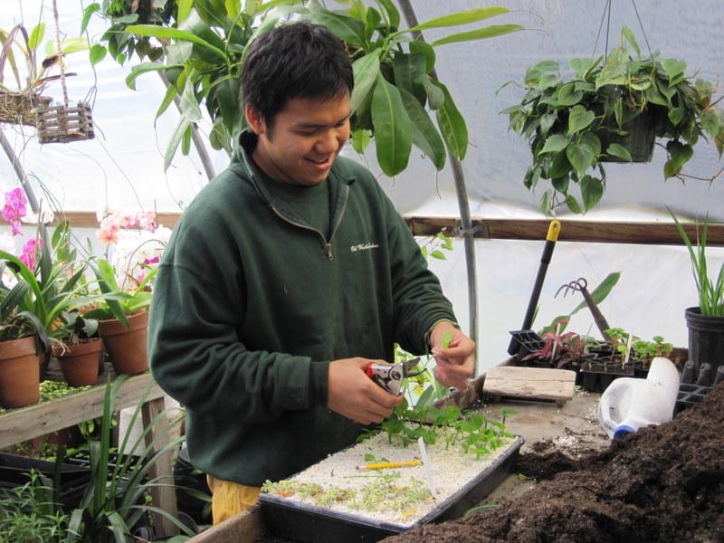 Greenhouse in Botanical Garden